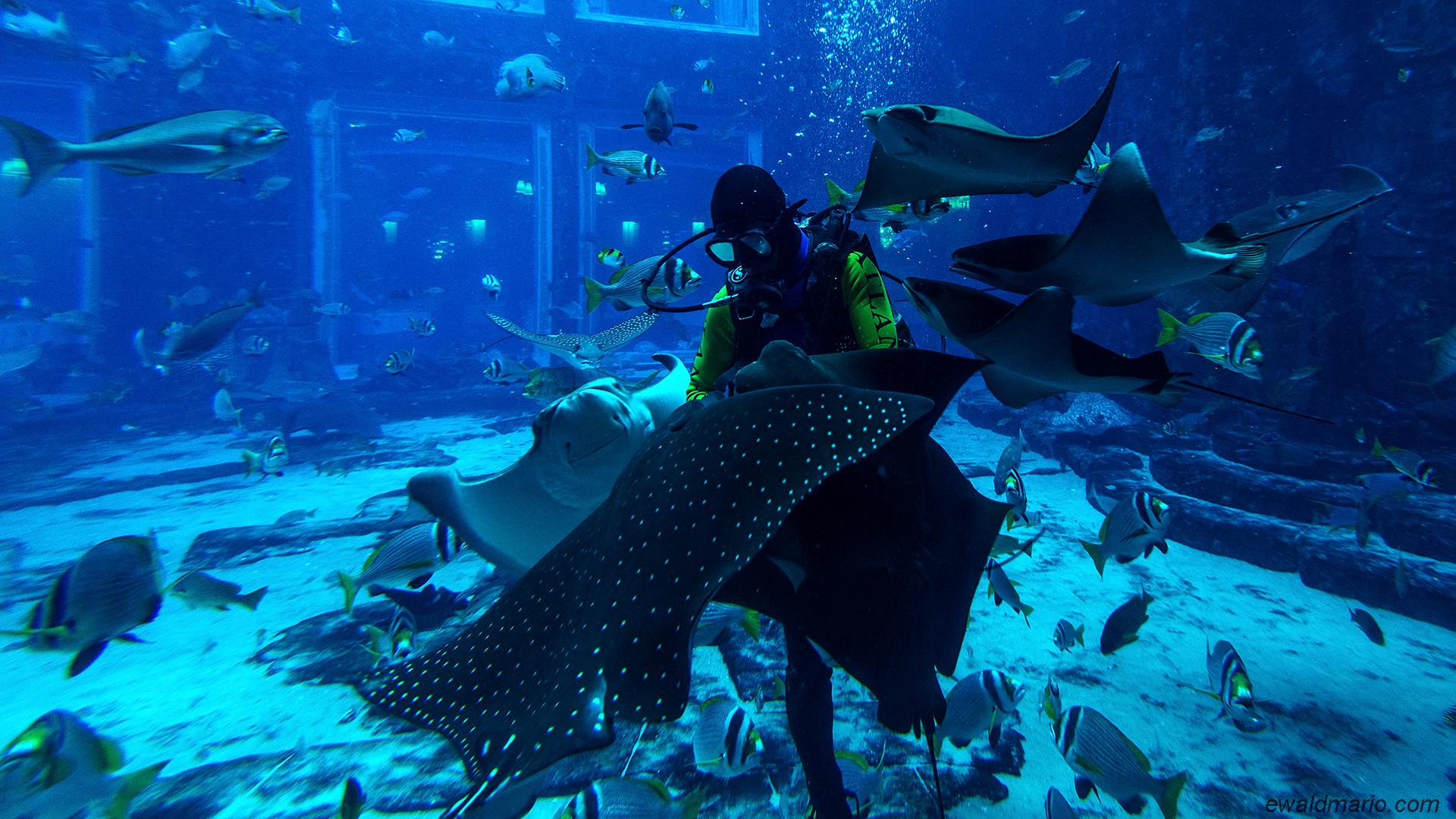 uae-503_lost_chambers_aquariums