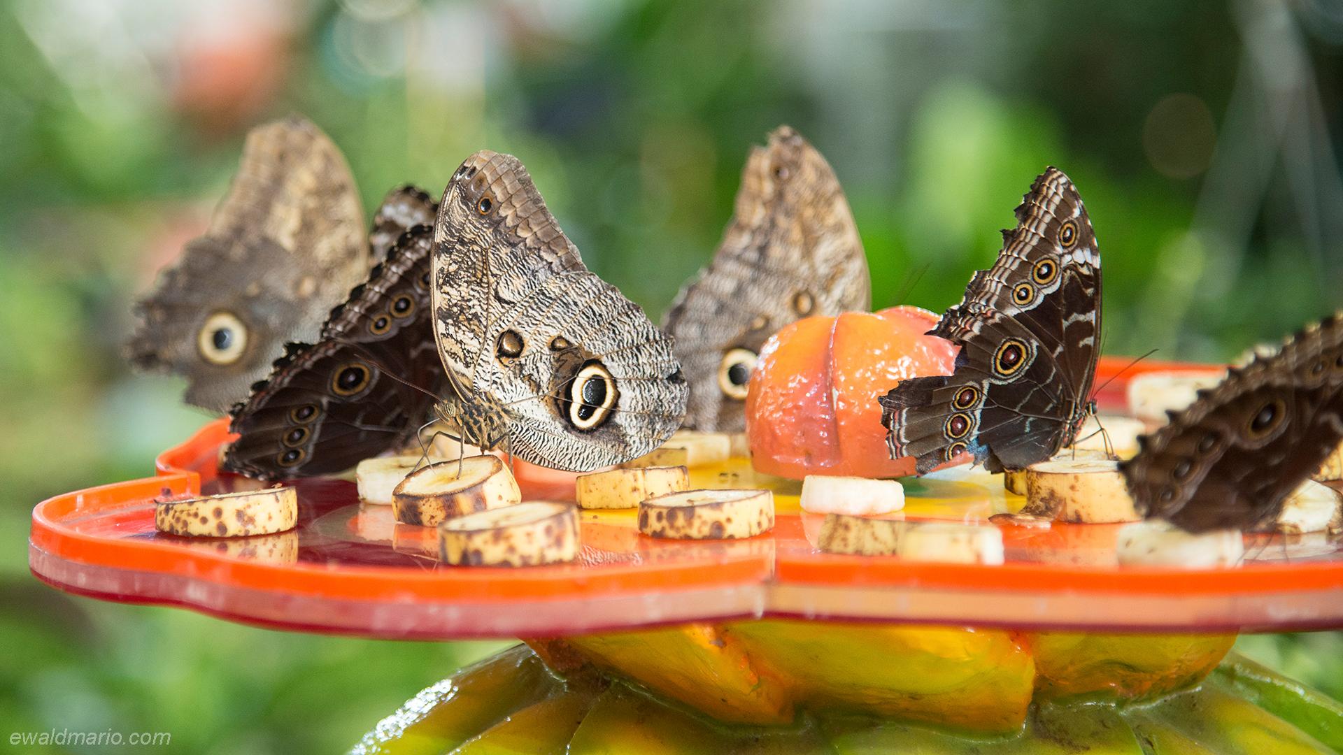 uae-751_butterfly-world