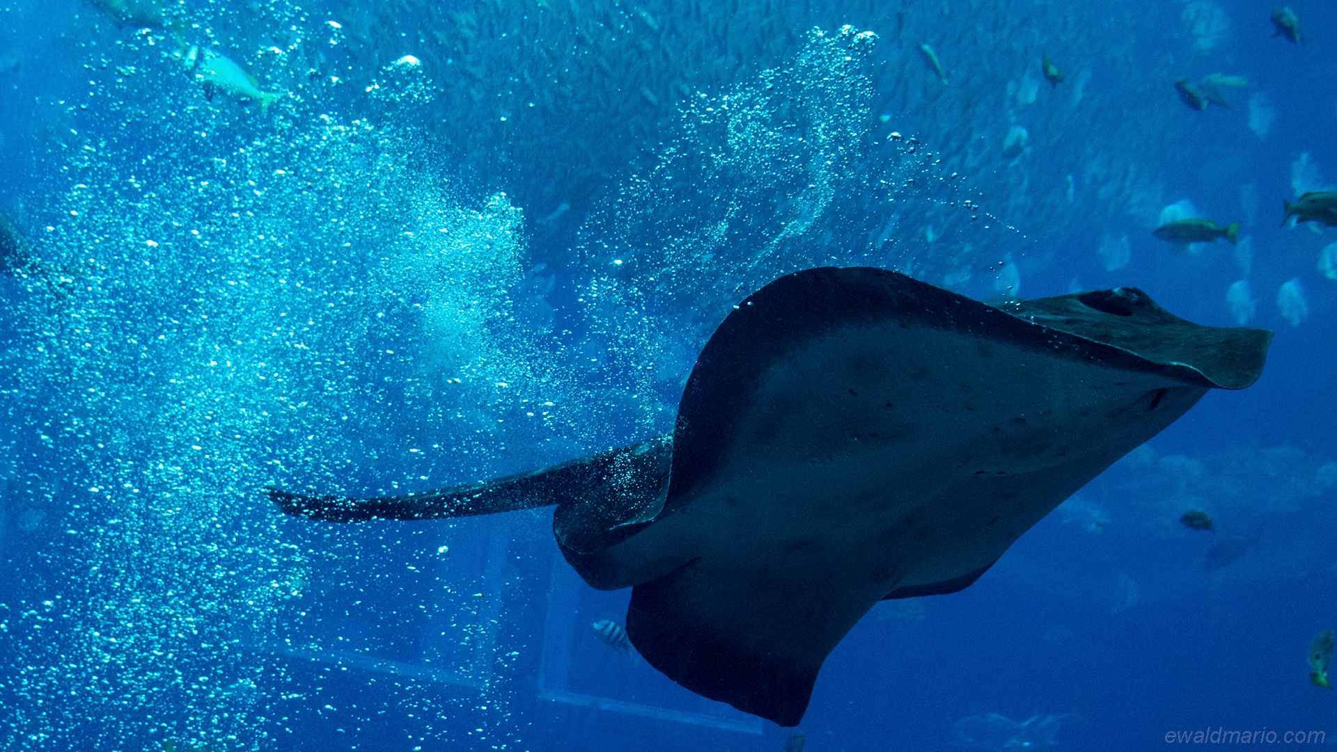 uae-515_lost_chambers_aquariums