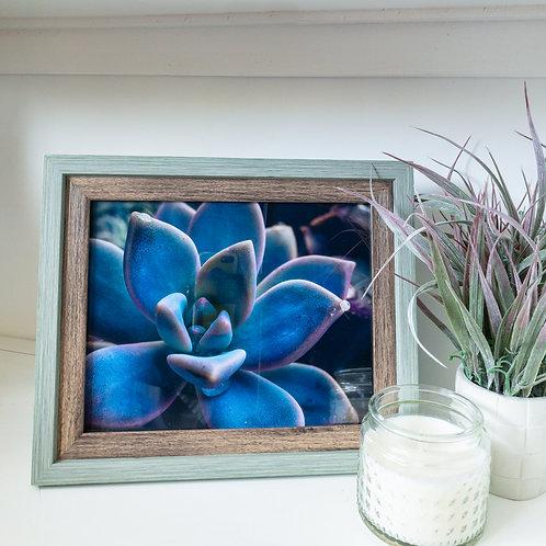 "Succulent framed print 8x10"""