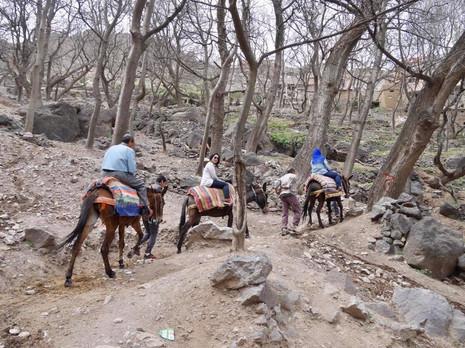 Mule Trekking, Imlil Morocco