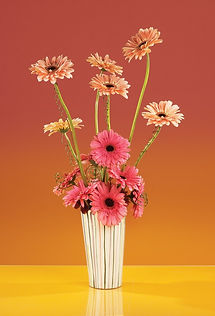 Flowers & Shot of Wired gerbera_edited.j