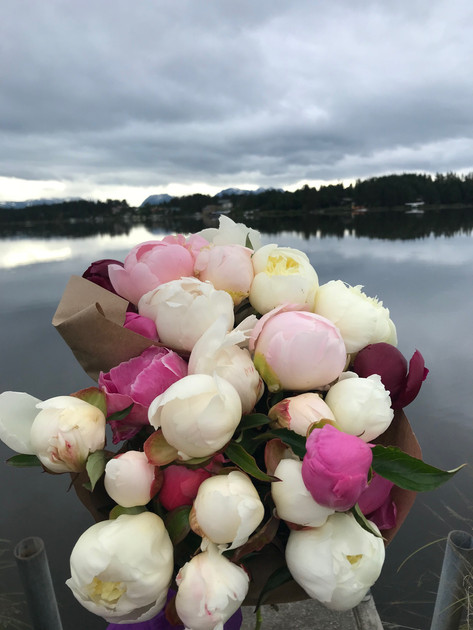Peonies By The Water