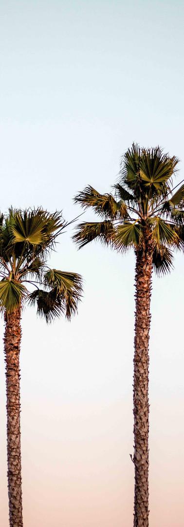 marisol-casben-palms_lowres.jpg