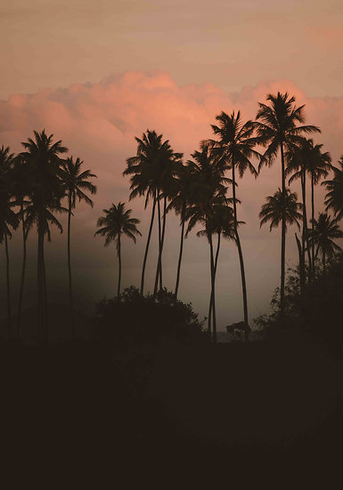 Jonatas Tinoco - Palms