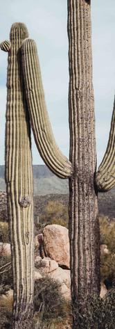 tracy-adams-cactus_lowres.jpg