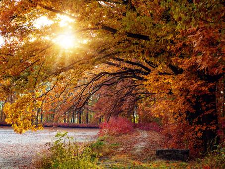 Kam na parádní podzimní fotky ?