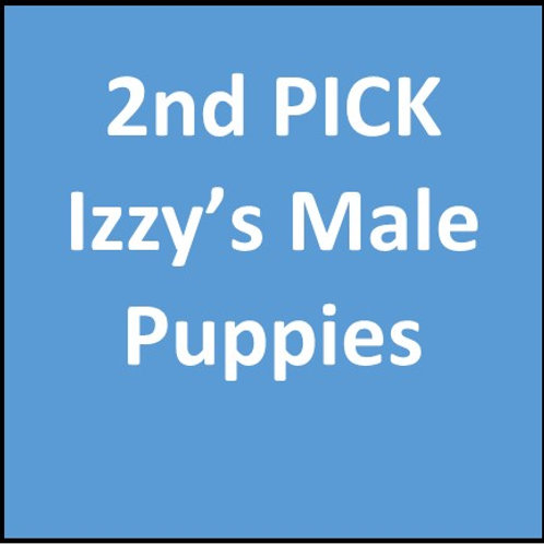 2nd Pick of Izzy's Males