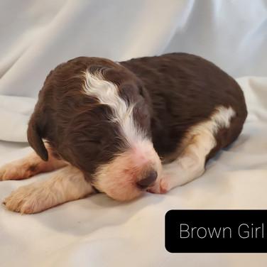 brown girl 2 1.jpg