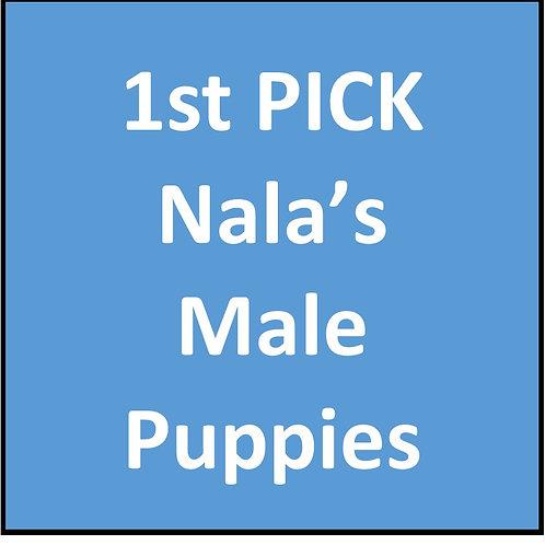 1st Pick of Nala's Males