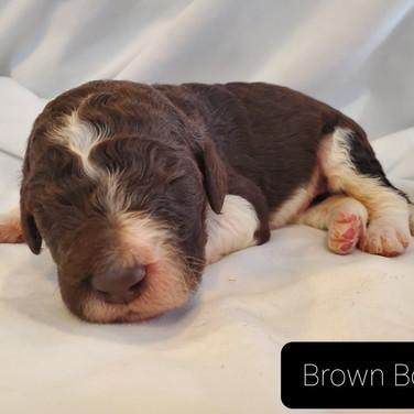 brown 2 4.jpg