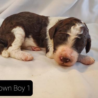 brown boy 1.jpg