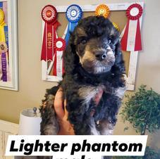 Lighter Phantom Male