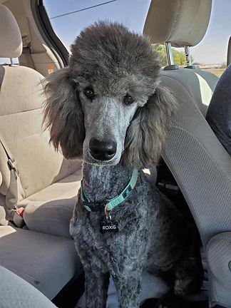 Roxie in car.jpg