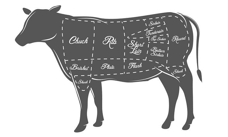 Bull Diagram.jpg