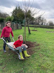 plantation arbres normandie
