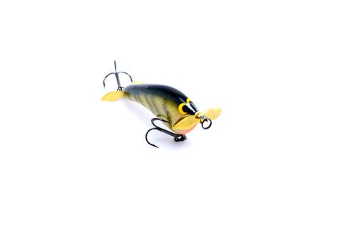 Tease- Yellow Perch