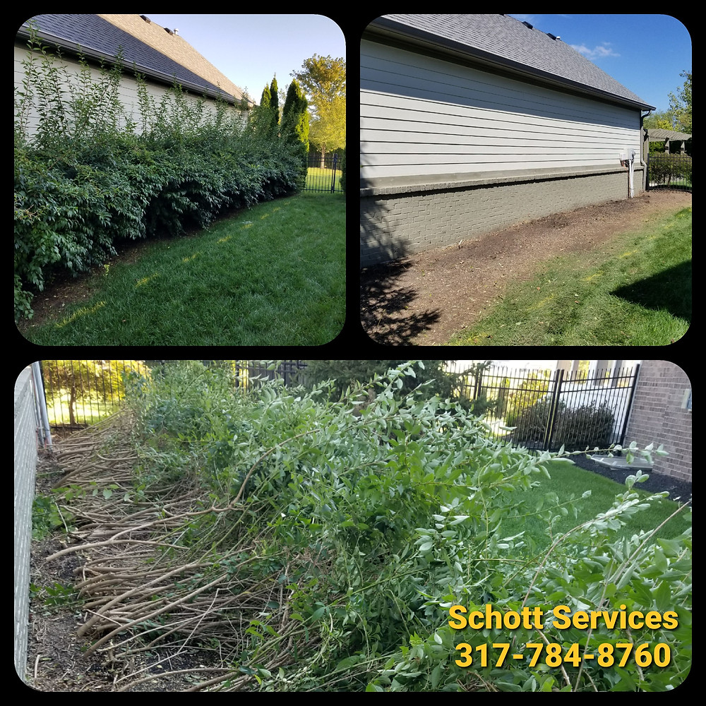 Shrub hedge removal, Landscape Removal, Schott Services, Indianapolis