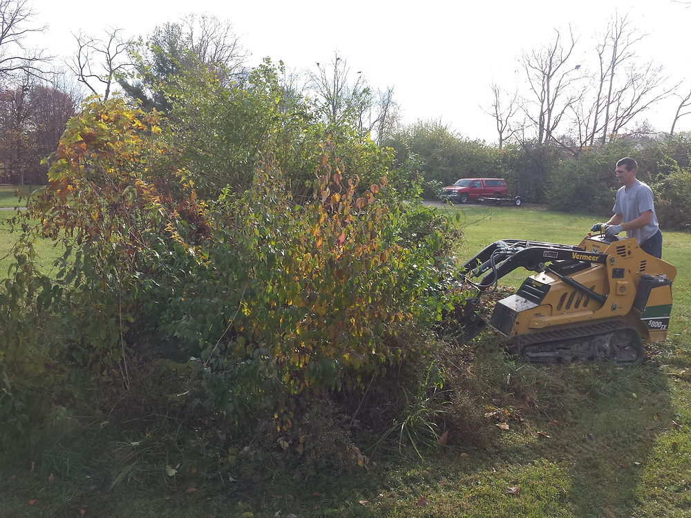 brush removal, lot clearing, tree removal, junk removal, trash removal, Carmel, Indianapoils, Zionsville, Greenwood, Speedway, Avon, Mooresville,