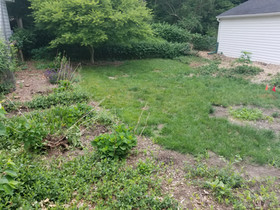 Schott Services provides total landscape removal, yard clearing, brush removal, brush clearing, power raking, yard grading, english ivy removal, landscape tear out, landscape demolition in Indianaoplis area.