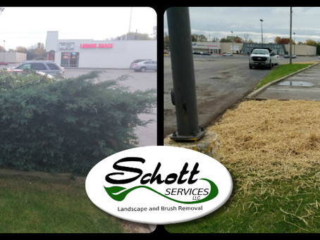 Commercial Landscape Removal