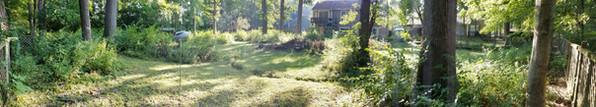 Brush Removal, Vegetation Control