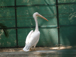 The Thrissur Zoo
