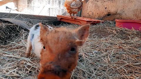 Conheça o Santuário Animal Sente