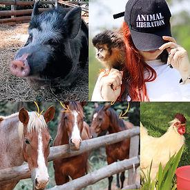 animal-sente-anmimais.jpg