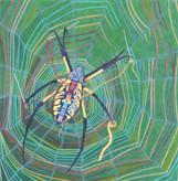 Seamstress Spider