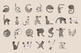 Kitty Typeface