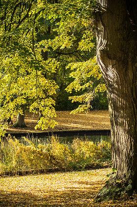 Autumn's finest