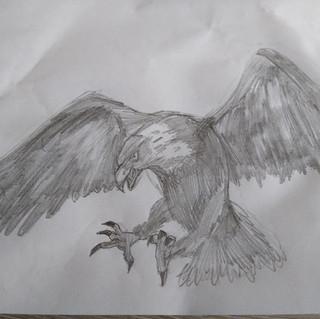 Eagle pencil sketch.  Max