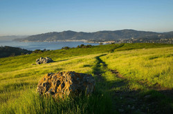 Marin County Real Estate May 2021 Report