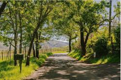 Napa County Real Estate May 2021 Report