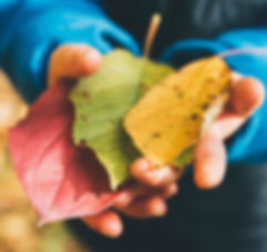 Child's Hand holding Autumn leaves