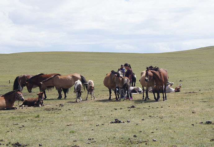 Séjour chevauchée Mythique en Mongolie