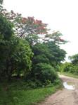 Tiefland: Weg zu Lomas de Arena