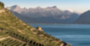 achat de vin en suisse romande pour les professionnels et les particuliers