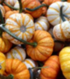pumpkins_6.jpg