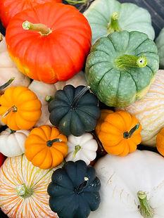 Specialty_pumpkins.jpg