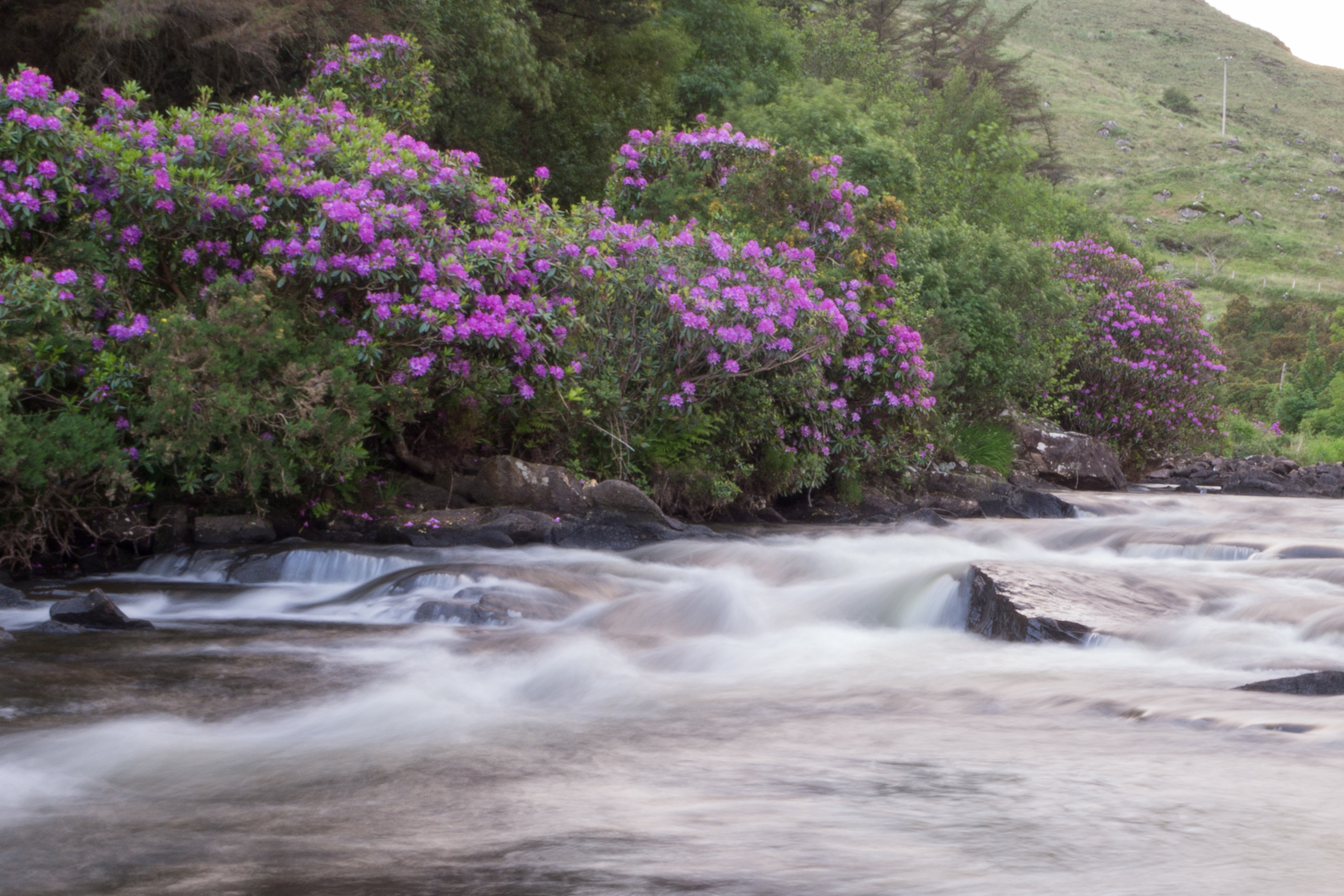 Irlande - Connemara -  mai 2017-177