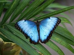 Animaux Costa Rica et Nicaragua   (2)