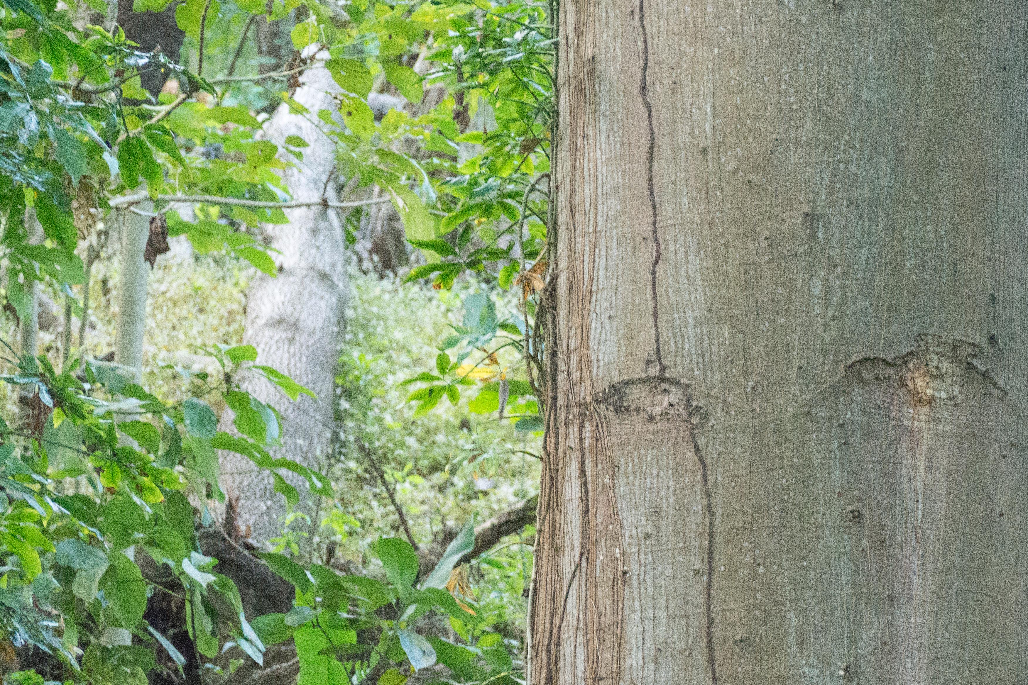 Photos_végétation_et_paysages_Costa_Rica_et_Nicaragua_(15_sur_114)