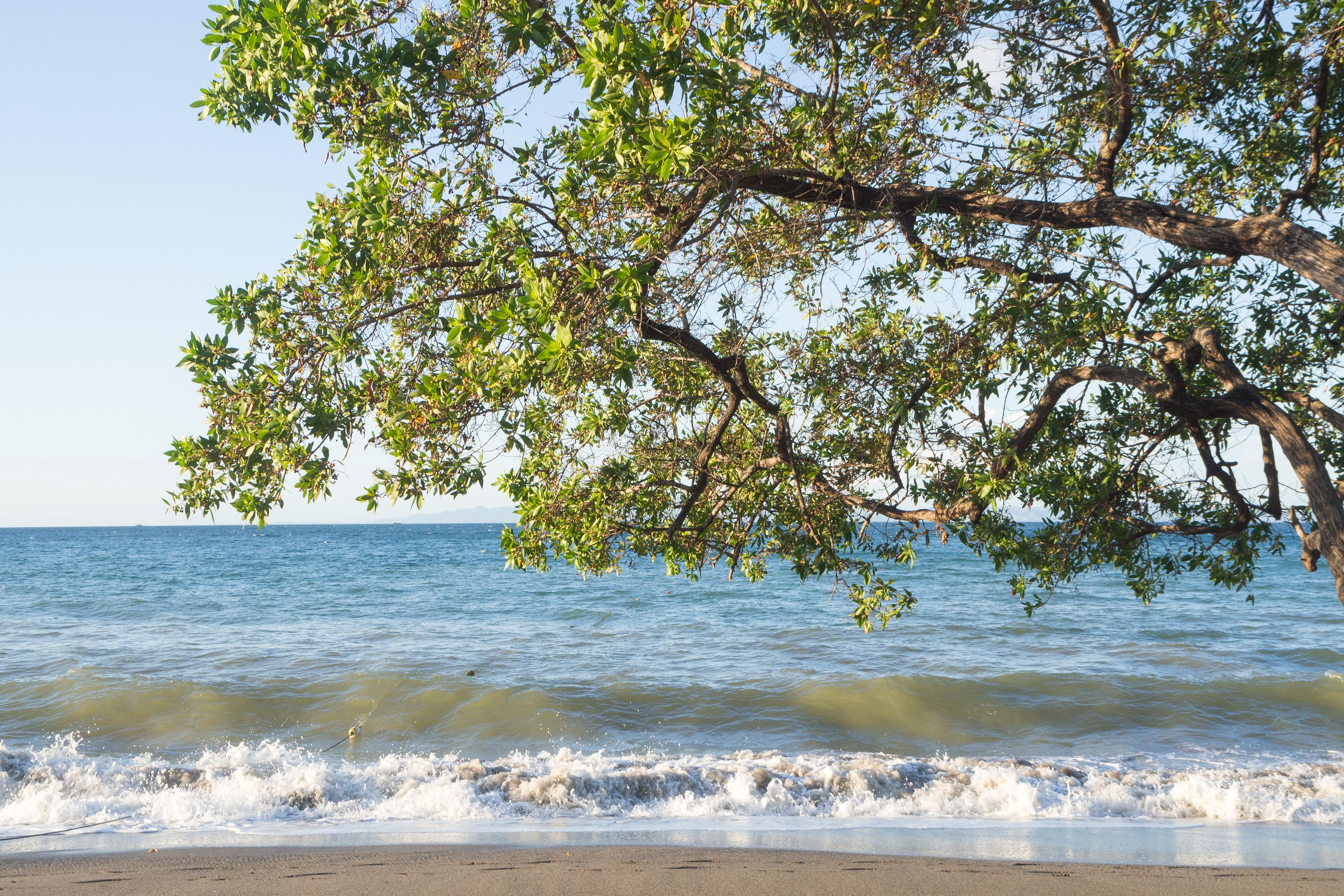 Photos_végétation_et_paysages_Costa_Rica_et_Nicaragua_(17_sur_114)