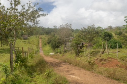 Photos_végétation_et_paysages_Costa_Rica_et_Nicaragua_(102_sur_137)