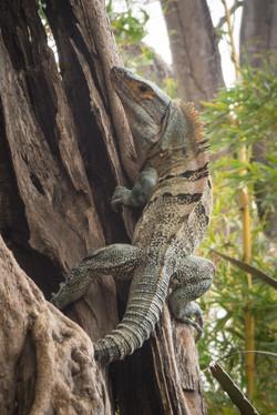 Animaux Costa Rica et Nicaragua   (14)