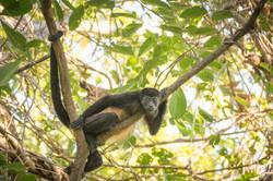 Animaux Costa Rica et Nicaragua   (19)