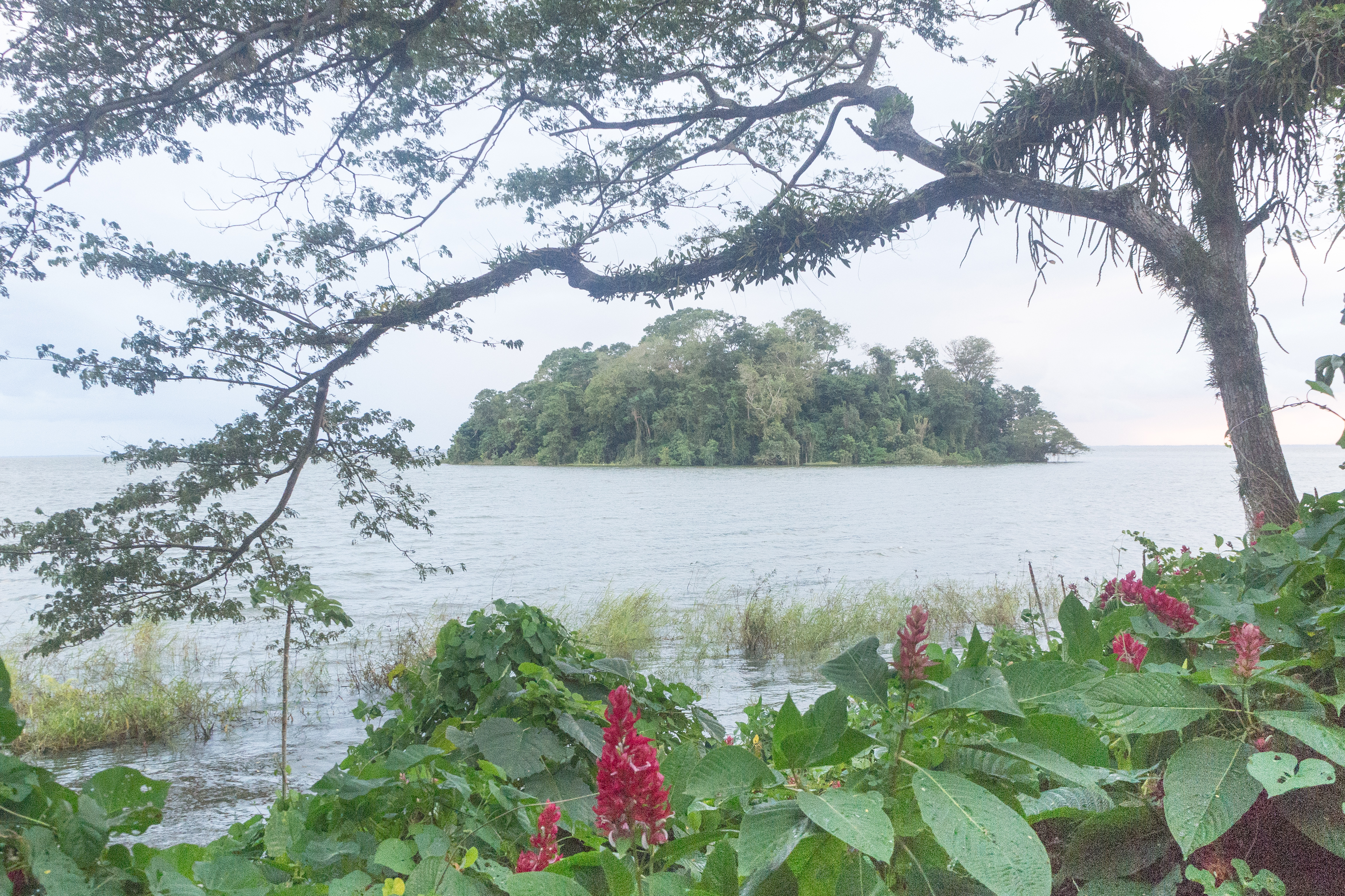 Photos_végétation_et_paysages_Costa_Rica_et_Nicaragua_(13_sur_137)