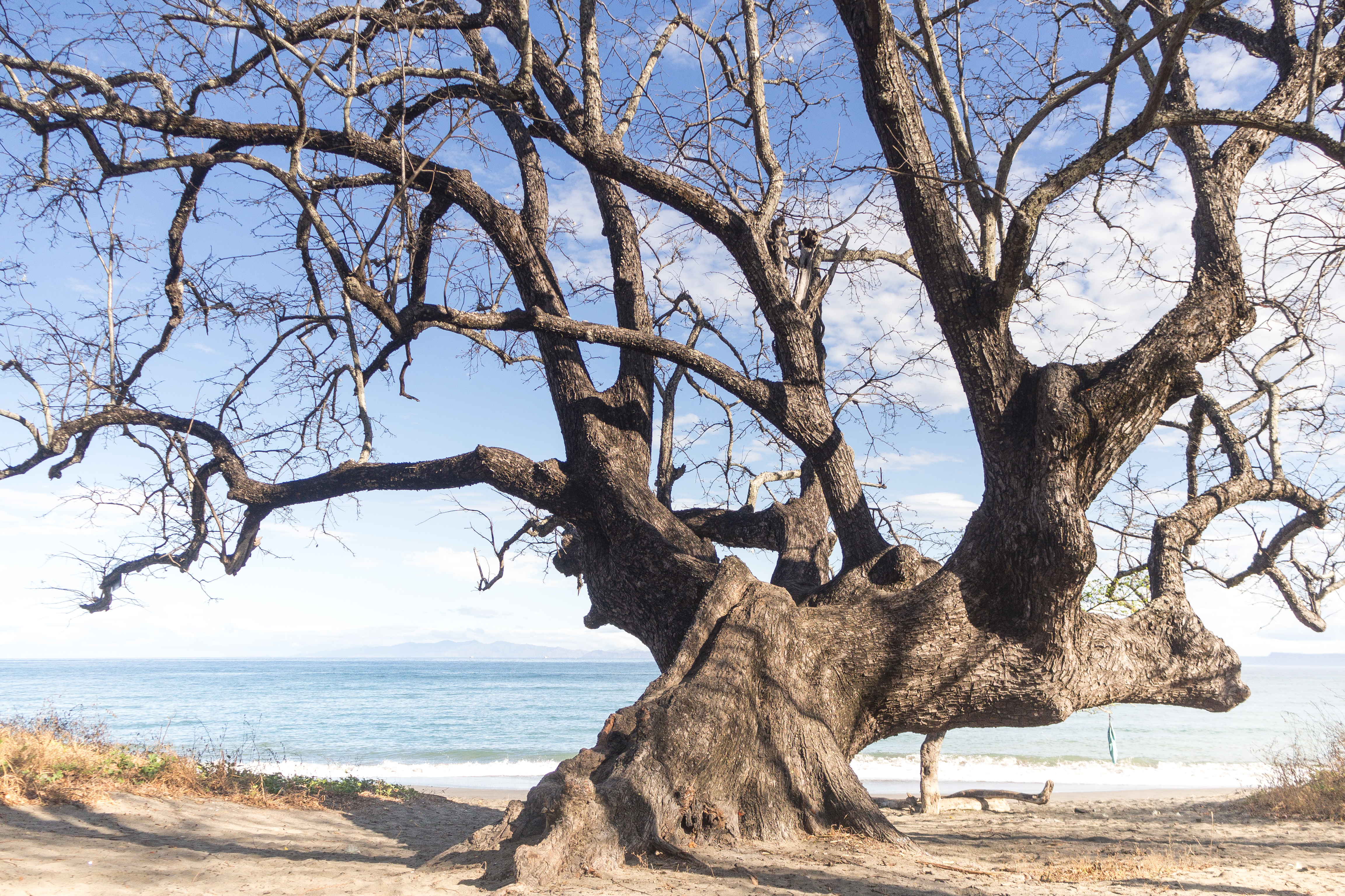 Photos_végétation_et_paysages_Costa_Rica_et_Nicaragua_(18_sur_114)